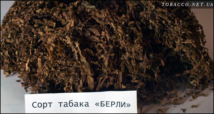 Берли, берлей - крепкий табак лапшой 0,8 мм